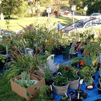 fall-book-plant-sale-2016